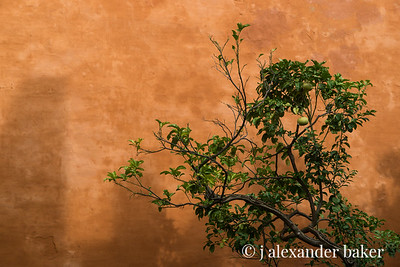 Alcazar Wall and Orange Tree, Seville Spain