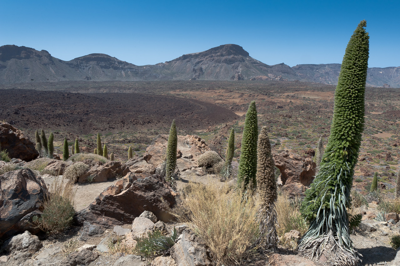 Shrubs and rock formation at Mount Teide in Tenerife, Spain
