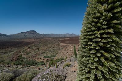 Shrubs in Mount Teide in Tenerife, Spain