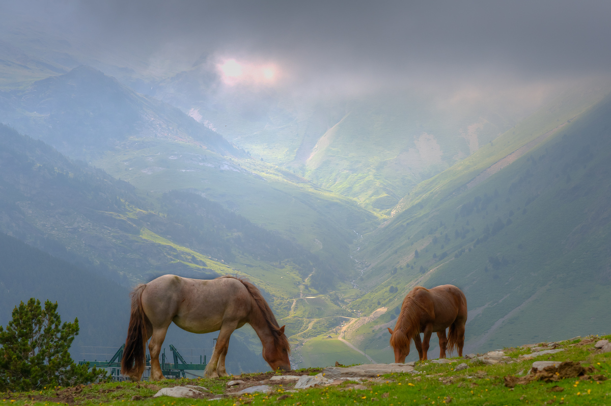 Horses Grazing on a Mountaintop in Val de Nuria, Spain