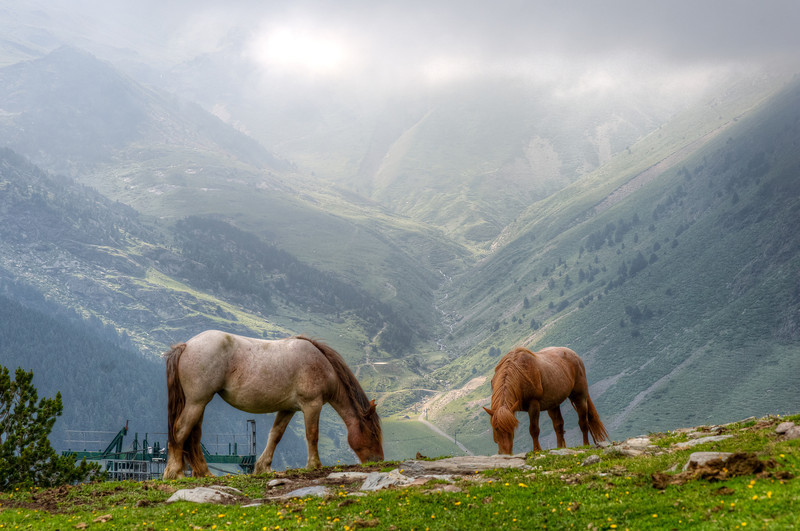 Horses grazing on a mountaintop in Vall de Nuria, Spain