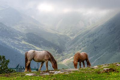 Horses grazing on a mountaintop in Vall de Nuria, Spain