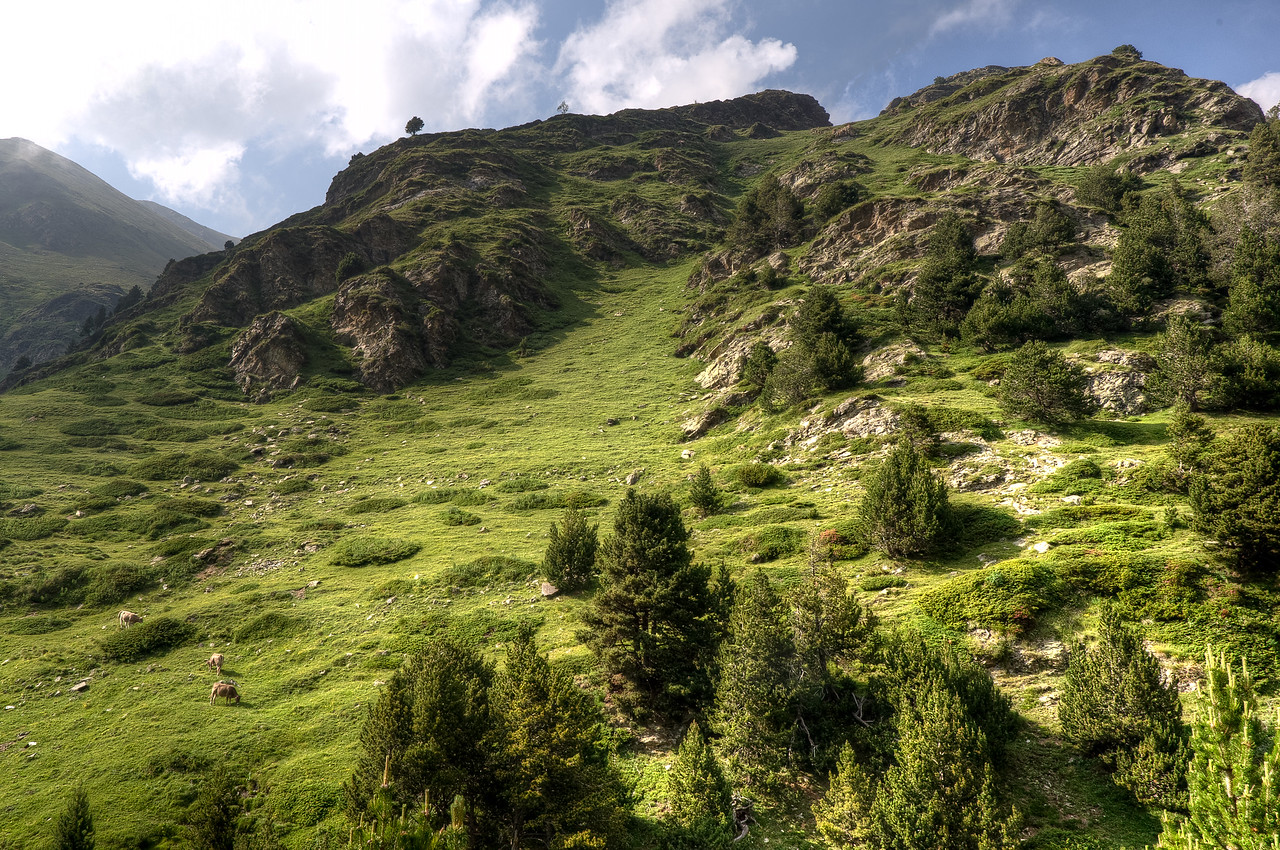 Green meadows in the Pyrenees Mountains in Vall de Nuria, Spain