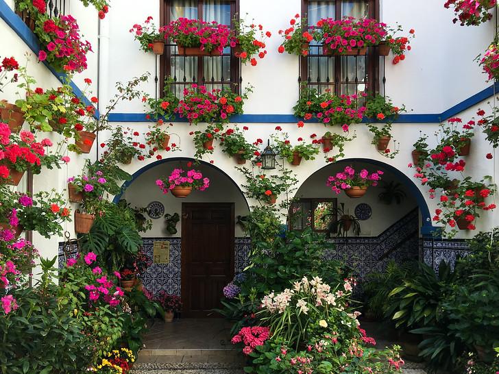 Patios De Cordoba Spain S Prettiest Flower Festival