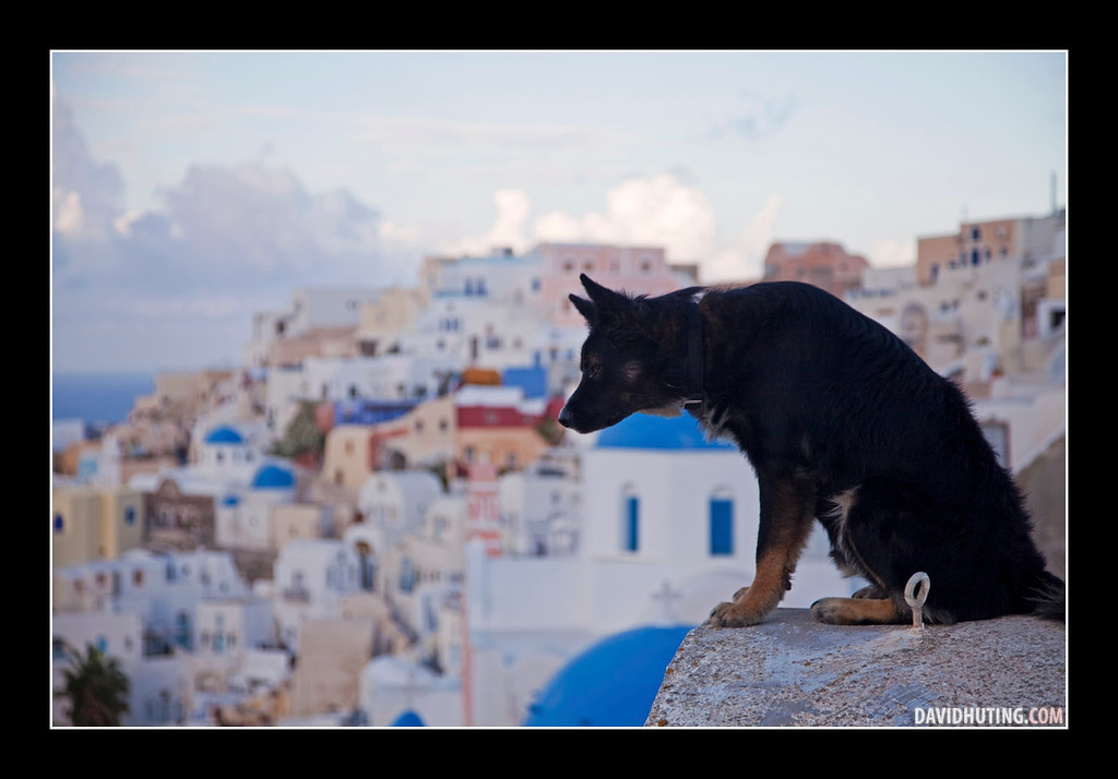Best View Dog LQWB