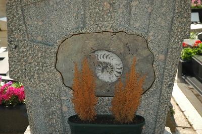 Ammonite tombstone