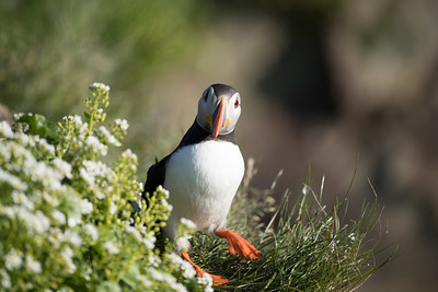 This is a famous area for birds with many puffins