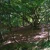 Tomelilla woodlands