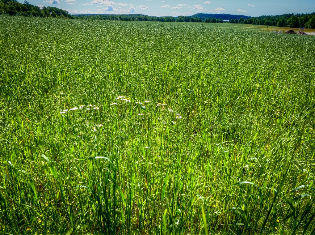 smogen sweden grass
