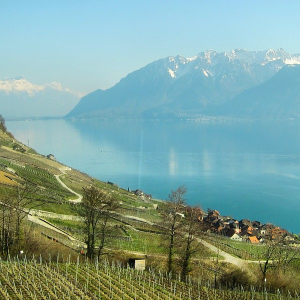 View from my train window - vineyards and snow-capped mountains hug Lake Geneva en route to Lausanne. This is Switzerland on a crisp spring day. And we're just getting started... This is Audrey, the other half of Uncornered Market, taking over this Instagram account for the week as I explore Switzerland by train on a mother-daughter journey. Hope you enjoy the #wifetakeover! via Instagram http://ift.tt/1OeazaS