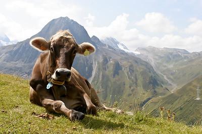 Switzerland 223