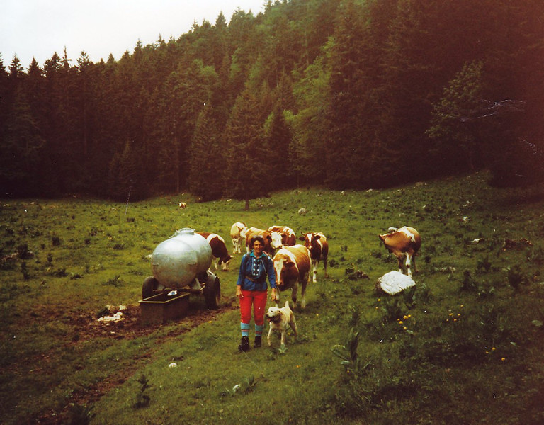 Hiking with the Cows