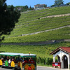 Switzerland, Lake Geneva, Lavaux Express Wine Train