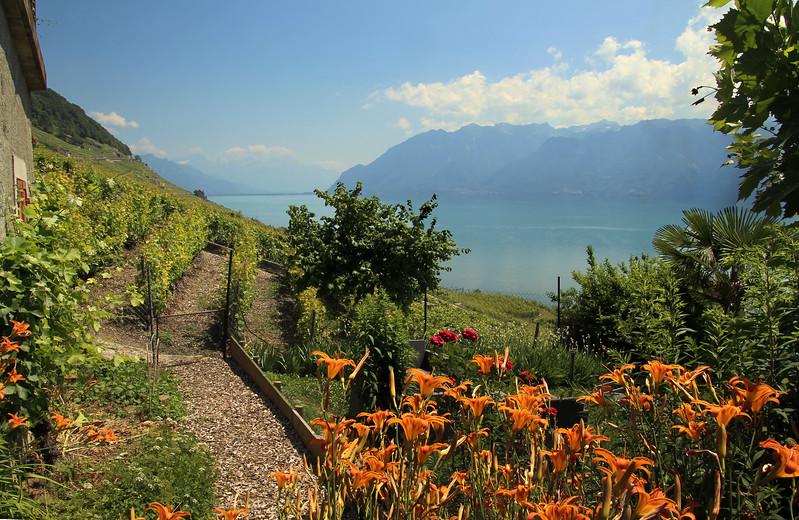 Switzerland, Lake Geneva Region, Winery, Lavaux Region