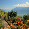 Switzerland, Lake Geneva Region, Winery, Lavaux Region