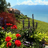 Switzerland, Lake Geneva,  Lavaux