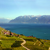 Switzerland, Lake Geneva Region, View on the Lavaux Wine Region, a UNESCO site