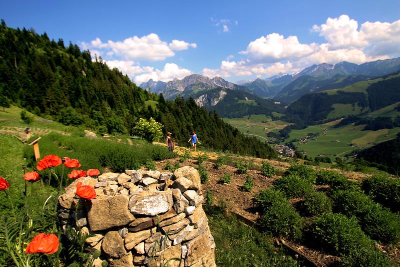 Switzerland, Pays-d'Enhaut, Jardins des Monts Garden