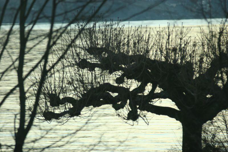 Lake Zurich, winter