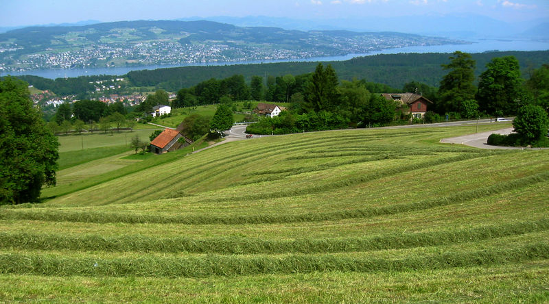 Above Thalwil, just below the forest, looking down on town and Lake Zurich.