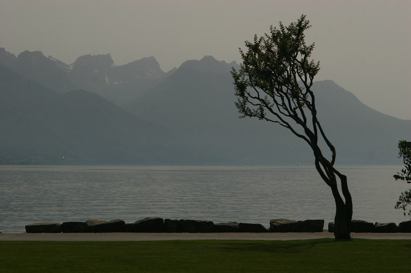 Tree in Montreux