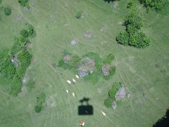 Cable car shadow and cows