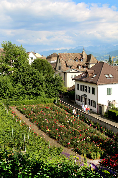 Switzerland, Rapperswil, Rose Garden