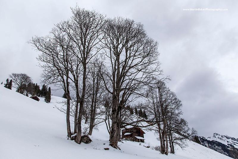 Sulwald, The Lauterbrunnen Valley, Bernese Oberland, Switzerland.