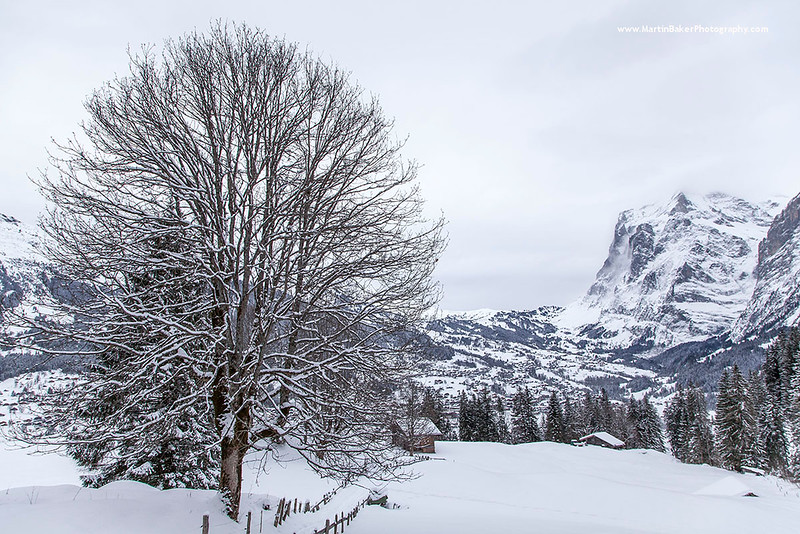 Alpiglen, and the Schreckhorn, Grindelwald, Bernese Oberland, Switzerland.