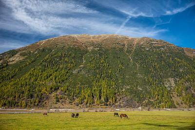 hill & horses Bever