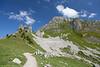 Schynige Platte, Bernese Oberland, Switzerland.