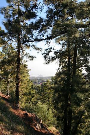 Pine trees on mountain road