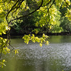 Green leaves with the water at the background