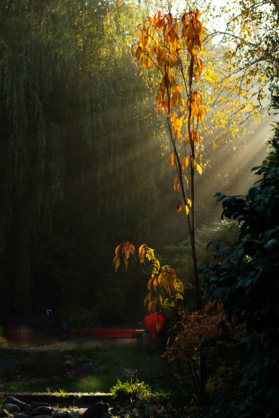 Rays of the sun in the autumn garden
