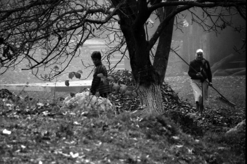 Men Clearing Autumn Leaves - Brasov, Romania
