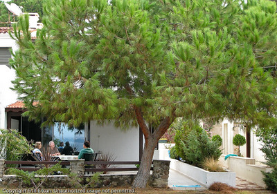 The tree affords a lot of privacy, but it also blocks us from seeing the beach house.