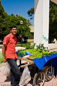 """Kültür Park - After sprucing up his display of plums with some greenery and sprinkling it with water, this young man proudly poses for me. These green plums are a variety known as """"can erik"""" (life plum); they're crisp and juicy, and quite delicious."""