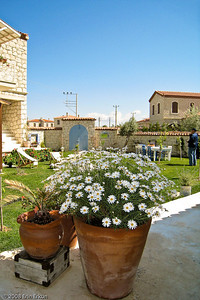 Alaçat Kırevi - In the language of flowers, daisies mean innocence or purity.