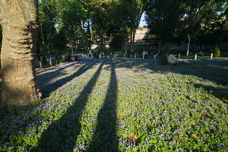 violets & shadows Gulhane Park