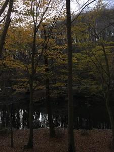 Belgrad Forest