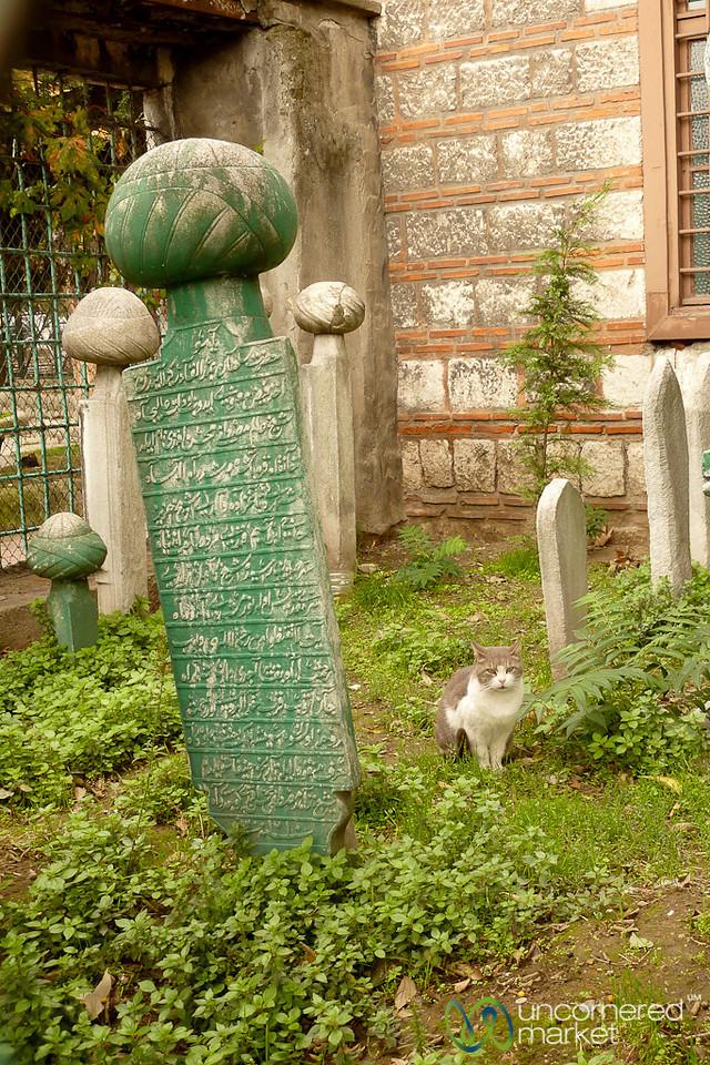 Cat at Muslim Turban Cemetery - Istanbul, Turkey