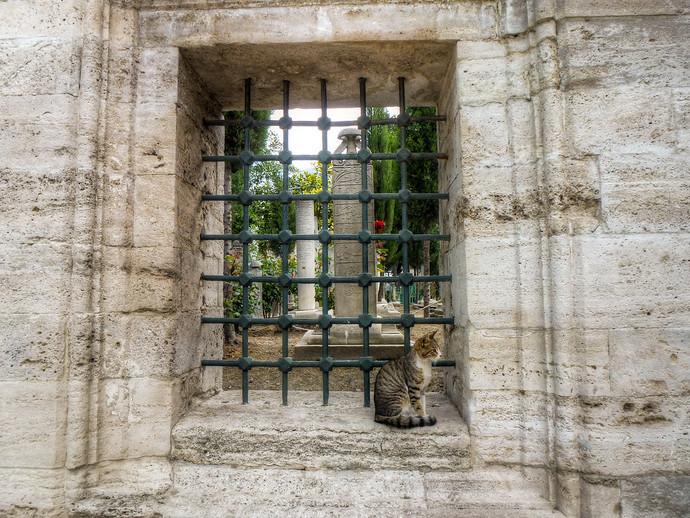 suleymaniye mosque istanbul cat