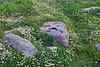 Daisies & Rocks in Trajan