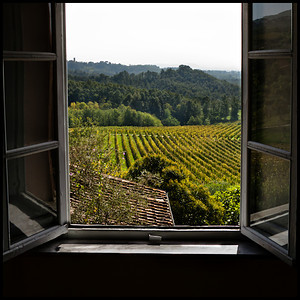 Colleverde vineyards, Lucca