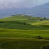 Tuscany-8411z