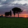 Tuscany-9437z