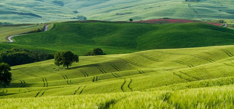 Tuscany-5603-04z
