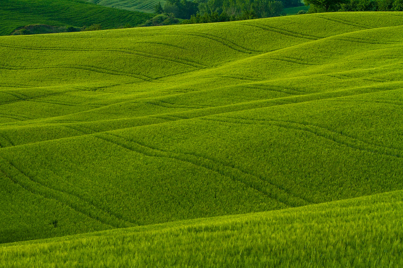 Tuscany-5576z