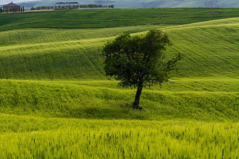 Tuscany-5663z