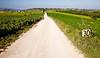 Road to Monticchiello